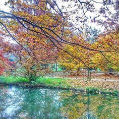 As cores do outono milanês presenteiam os visitantes do Parco Sempione. Uma obra de arte viva! 🍂🍁🙏 #piacereitalia #milano #milao #autumn #parcosempione #italia #italy