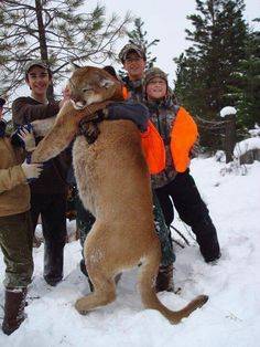 Americas apex predator being killed for what. Hunting is good I am not some one who hates it in fact I am a hunter my self but this was killed for what a trophy. Trophy Hunting, Deer Hunting, Rifles, Mountain Lion Hunting, Predator Hunting, Apex Predator, Hunting Pictures, Hunting Season, Big Cats