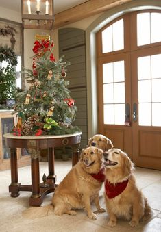 A Canine Christmas - golden doggies