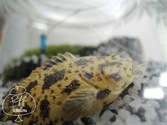 Big Fish Terrarium  Find us on Facebook :: puff terrariums #puff #terrarium #home #work #sky #decor #decoration #plant #cactus #garden #cat #puppy #wedding #centerpiece #green #moss #gift #DIY #crafts #art #cute #jar #happy #bottle #yolo #lol #hkig