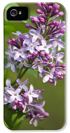 Lilac Flowers iPhone 5 case by Christina Rollo.  Protect your iPhone 5 with an impact-resistant, slim-profile, hard-shell case.  The image gets printed directly onto the case and wrapped around the edges for a beautiful presentation.  Simply snap the case onto your iPhone 5 for instant protection and direct access to all of the phones features.
