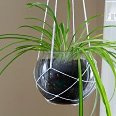 hang this inside where you use your laptop or computer as this plant reverses the ions MySpring Decor: Modern Macrame Plant Hanger Modern Plant Stand, Diy Plant Stand, Picture Frame Wreath, Macrame Plant Holder, Macrame Projects, Diy Projects, Do It Yourself Crafts, Diy Hanging, Hanging Baskets
