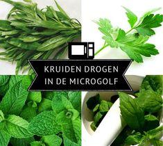7 stappen om verse kruiden snel in de microgolf te drogen. (Selderijblad kan ook!).