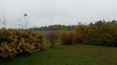 Podzimni zahrada