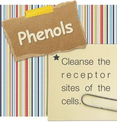 Young Living Essential Oils: Phenols: cleanse the receptor sites of the cells.