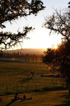 Scribe Winery, Northern California