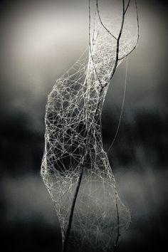 Herbst  Spinnennetz