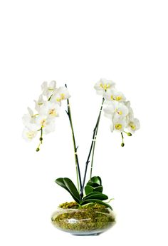 Hard to believe, but these are silk orchids.Excellent for boutique windows with lots of sunshine. Expensive initially but will last forever with some dusting off. Silk Orchids, Orchid Arrangements, Orchid Plants, Plant Design, Sunshine, Windows, Boutique, Flowers, Florals