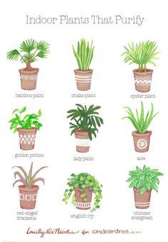 Indoor Plants That Purify.  Bohemian Wornest-France