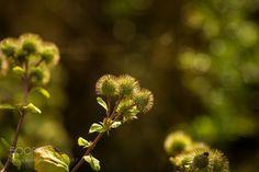 #nature very adherent by WGH_DigitalArt