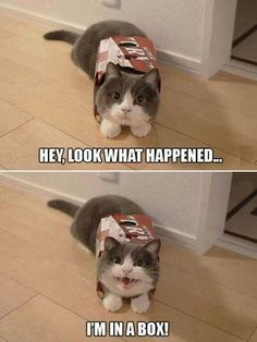 Click the photo If you'd like to see more FUNNY cat photos - Tiere / Animals - Katzen / Cat Funny Animal Memes, Cute Funny Animals, Cute Baby Animals, Funny Cute, Cute Cats, Funny Kitties, Funny Memes, Hilarious, Funniest Animals
