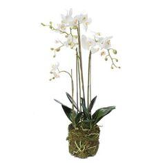 Orkide plante med mos, 80 cm. - hvid