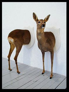 Taxidermy In Art