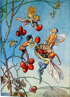 Illustration by Margaret Tarrant for the book 'Joan in Flowerland', written by Margaret Tarrant and Lewis Dutton. A scene depicting 3 fairies and an elf collecting rose hips from a branch. Cicely Mary Barker, Kobold, Vintage Fairies, Flower Fairies, Fairy Art, Magical Creatures, Faeries, Vintage Prints, Illustrators