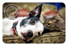 Dog-A-Day for Canine Cancer by Bailey & Banjo pet photography  CityDogMagazine