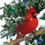 View bigger - Christmas Cardinal Live Wallpa for Android screenshot