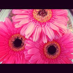 Pink flowers! #snaphappybritmums Snap it, pin it, tweet it