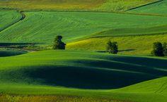 palouse farm study - Washington States answer to Tuscany with rolling hills and farmland as far as the eye can see. Washington State, Tuscany, Golf Courses, Study, Eye, Photography, Studio, Photograph, Tuscany Italy