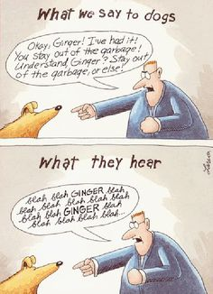 Blah Blah Ginger By Gary Larson (Far Side Comic) Photo: This Photo was uploaded by spn_imgs. Find other Blah Blah Ginger By Gary Larson (Far Side Comic). Far Side Cartoons, Far Side Comics, Funny Cartoons, Funny Comics, Dog Comics, Haha Funny, Funny Dogs, Hilarious, Funny Stuff