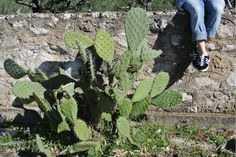Cactus, Blog, Travel, Viajes, Traveling, Trips, Tourism