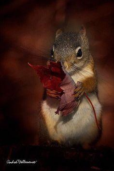 Precious..Fall
