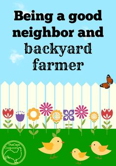 Is it possible to be both a good neighbor AND a backyard farmer? Check out my tips for keeping the peace in the suburbs Backyard Ducks, Backyard Farmer, Backyard Poultry, Chickens Backyard, Backyard Landscaping, Best Egg Laying Chickens, Raising Chickens, Urban Chickens, Building A Chicken Coop