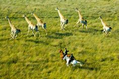 These shots will put riding in the Okavango Delta on any horse riders bucket list.