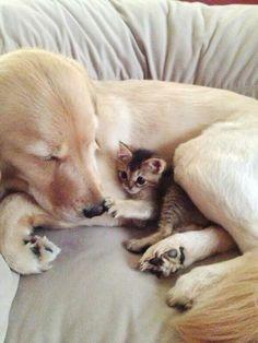 En nog eens hond als moederpoes.