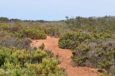 Parc naturel du Souss Massa Formations Rocheuses, Destinations, Vineyard, Country Roads, Outdoor, Lounge Music, Atlantic Ocean, Small Towns, Natural Park