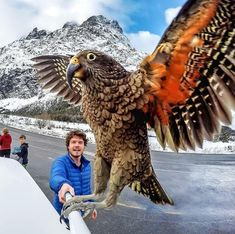 "Auckland-based adventurer Allan Dixon, also known as ""the animal whisperer,"" travels around the world taking the best selfies with adorable animals. Selfies, Animals And Pets, Funny Animals, Cute Animals, Animals Photos, Wild Animals, Beautiful Birds, Animals Beautiful, Beautiful Pictures"
