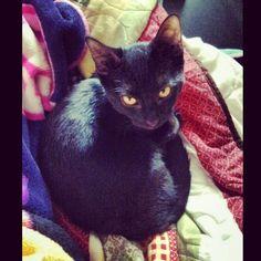 Another of my favorite pics of my baby boy :) #black #cat # kitten #kitty #babyboy #blackcat #blackkitty #blackkitten #yelloweyes