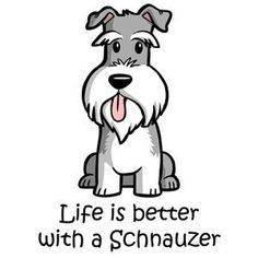 Ranked as one of the most popular dog breeds in the world, the Miniature Schnauzer is a cute little square faced furry coat. Miniature Schnauzer Puppies, Schnauzer Puppy, Silly Dogs, Cute Dogs, Most Popular Dog Breeds, Dog Facts, Happy Animals, Cartoon Drawings, Life Is Good