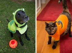 Stay Safe for a Happy Howl-o-Ween! » Paws PR Blog
