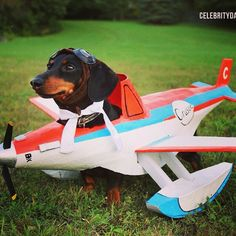 Crusoe the Celebrity Dachshund – Winner Best Pet Blog 2013/14