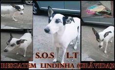 BONDE DA BARDOT: Santa Cruz /RJ! Resgate ou Lar Temporário urgente para Lindinha ter seus bebês em segurança!