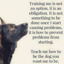 German Shepherd Training: Training your dog is not an option, it is an obligation. It is not something to … – Sam ma Dog Training Dog Commands Training, Training Your Puppy, Dog Training Tips, Training Videos, Training Online, Husky Training, Potty Training, German Shepherd Training, German Shepherd Dogs