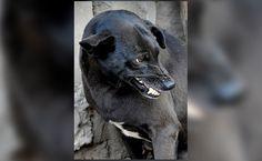 Kerala Senior Citizen Attacked, Partly Eaten By 50 Stray Dogs