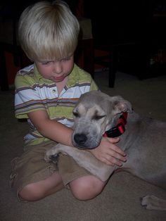 The Dog Days (and Nights) of Disney.  Traveling to Disney World with pets made easy: http://di.sn/eES
