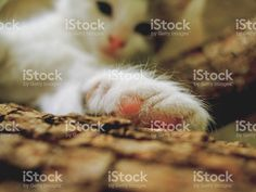 cat showing her leg foto de stock libre de derechos