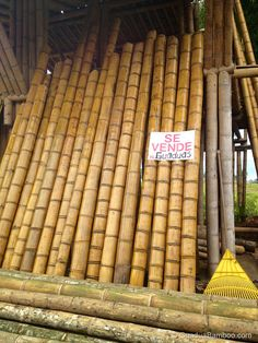 Durability of Bamboo — Guadua Bamboo Bamboo Species, Underwater Hotel, Bamboo Construction, Bamboo Poles, Bamboo Crafts, Bamboo Furniture, Modern Bedroom, Flower Pots, Wood