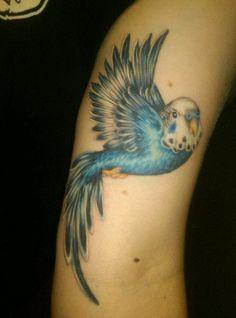 parakeet tattoos - Google Search
