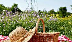 Especial pícnics (I): espais i zones del Gironès, la Selva i el Pla de l'Estany