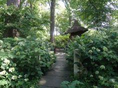 Oakleaf hydrangeas line the walk to the Troll House at Winterthur Garden near Wilmington.