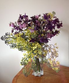 Aquilegia and purple sprouting broccoli from the garden