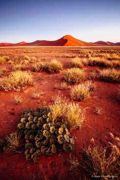 musts: Namibia, Africa Wonderful Places, Beautiful Places, Landscape Photography, Nature Photography, Land Of The Brave, Desert Places, Deserts Of The World, Cap Vert, Namibia