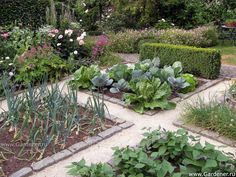 Lovely garden: I like that the layout is simple, but the paths and the edged beds give it a planned/formal/tidy look.