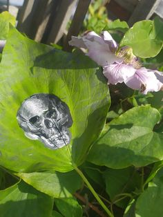 acrylic paint, approx. 15cm x 12cm Skull Painting, Natural Forms, Decay, Leaves, Nature, Naturaleza, Nature Illustration, Off Grid, Natural