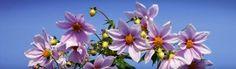 Amazing Beautiful Flowers Header