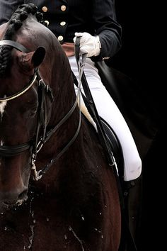 The beauty from equestrianism is that you learn to speak a language that no one else can speak. The language of your horse.