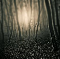 monochrome, forest, dream, glow, warm, foreboding, surreal